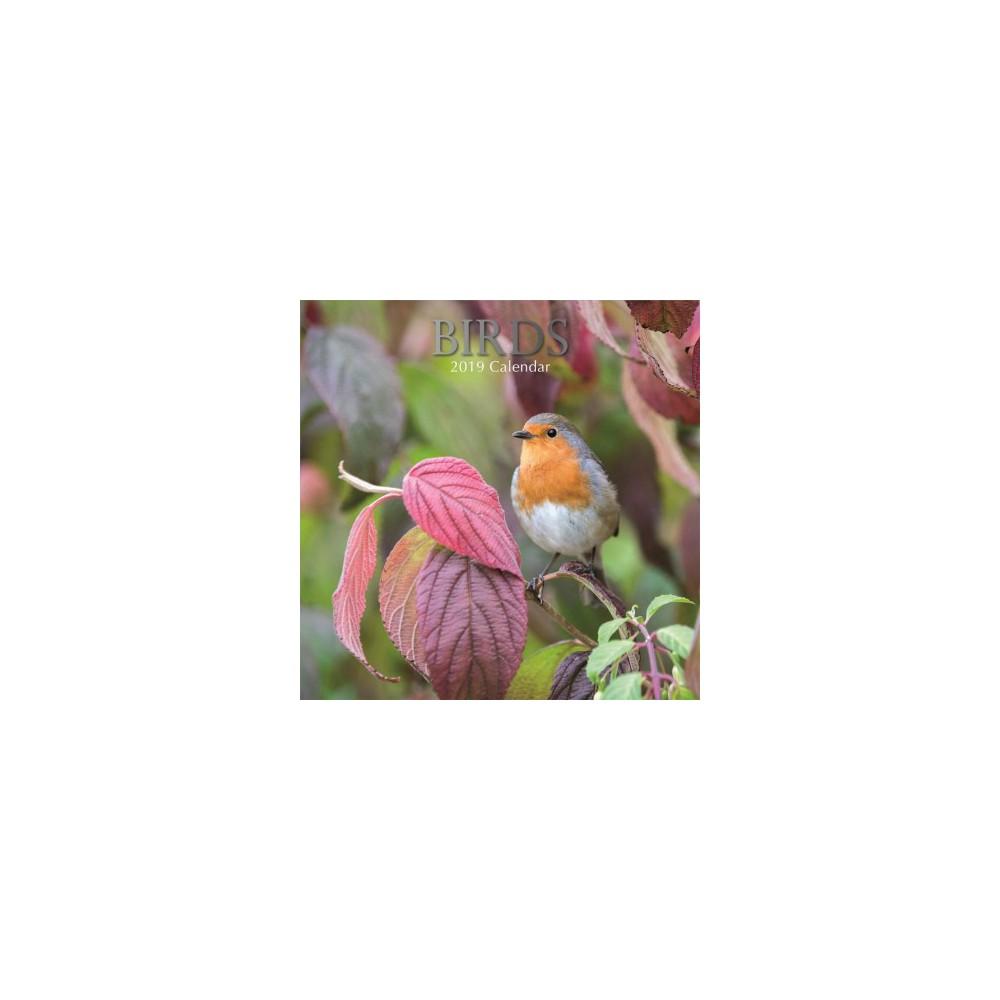 Birds 2019 Calendar - (Paperback)