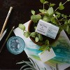 Spring & Vine Tea Tree & Mint Scalp Soothing Shampoo Bar - 3.5oz - image 2 of 4