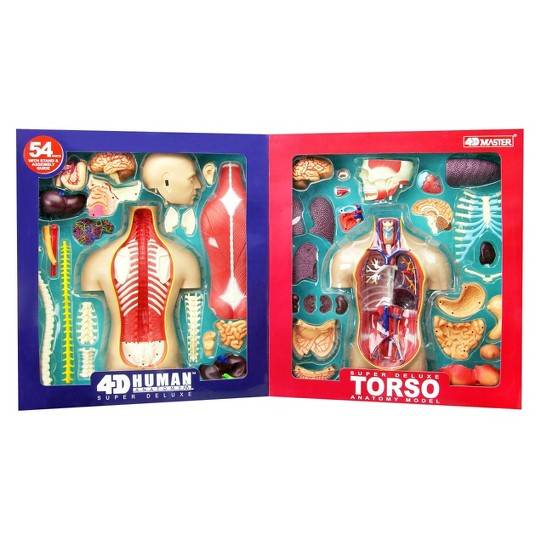 4D Master Super Deluxe Human Torso Anatomy Model 54pc image number null