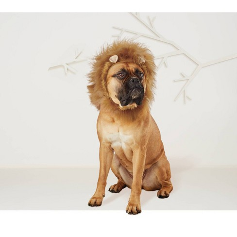 Lion Mane Dog & Cat Costume - Hyde & EEK! Boutique™ - image 1 of 4