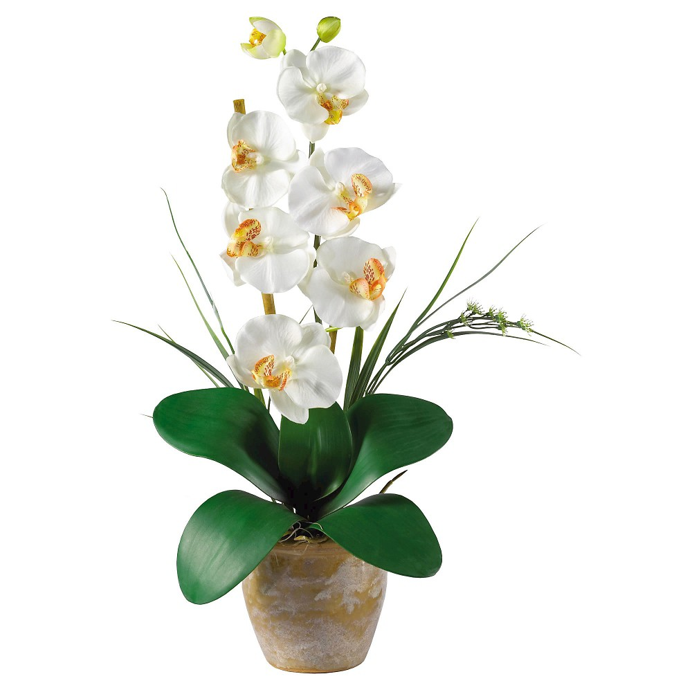 Nearly Natural Phalaenopsis Silk Orchid Flower Arrangement Cream (Ivory) Maintaining delicate orchids never looked this easy with the Nearly Natural Phalaenopsis Silk Orchid Flower Arrangement Cream. With long rich green leaves fanning out in intricate geometric patterns with chic cream orchids, it's no wonder that this faux arrangement brings a bit of tropic decor to any living arrangement. It is made of silk to give natural look and comes with ceramic pot and soil.
