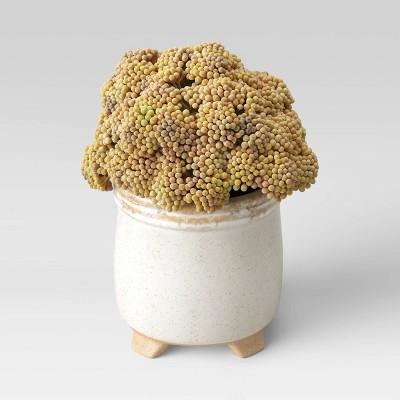 "Shop 11"" x 9.5"" Artificial Trachelium Arrangement in Ceramic Pot from Target on Openhaus"