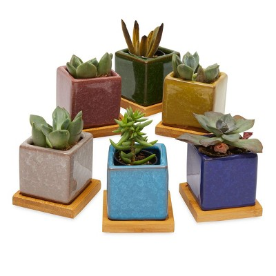 """Okuna Outpost Set of 6 Mini Ceramic Planter Pots 2.5"""" with Drainage Hole & Tray for Indoor & Outdoor Succulents Plants"""
