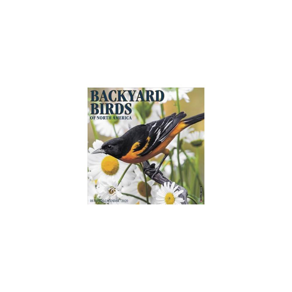 Backyard Birds 2020 Calendar - (Paperback)