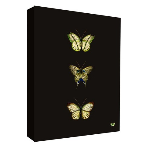 "Butterfly Portrait I Decorative Canvas Wall Art 11""x14"" - PTM Images - image 1 of 1"