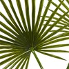 """49"""" x 40"""" Artificial Fan Palm Arrangement in Glass Vase - Nearly Natural - image 2 of 3"""