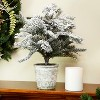 """Northlight 20"""" Unlit Artificial Flocked Pine Tree in Faux Paper Pot - image 2 of 3"""