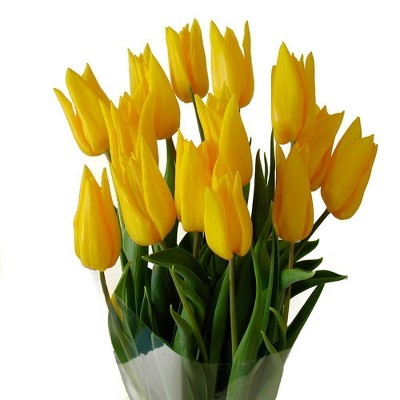 Fresh Cut Yellow Tulips - 15ct