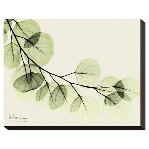 A Eucalyptus Moment By Albert Koetsier Stretched Canvas Print - image 1 of 2
