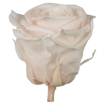 Vickerman all Natural Rose Head