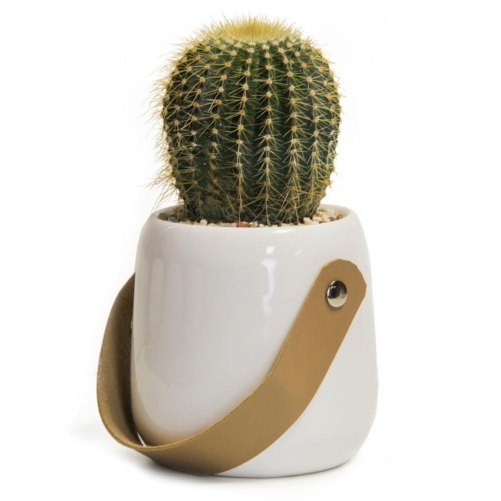 Image of Helsinki Living Cactus In Decorative Ceramic Container - Livetrends Design