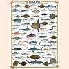 Eurographics Sea Fish 1000 Piece Jigsaw Puzzle - image 2 of 3