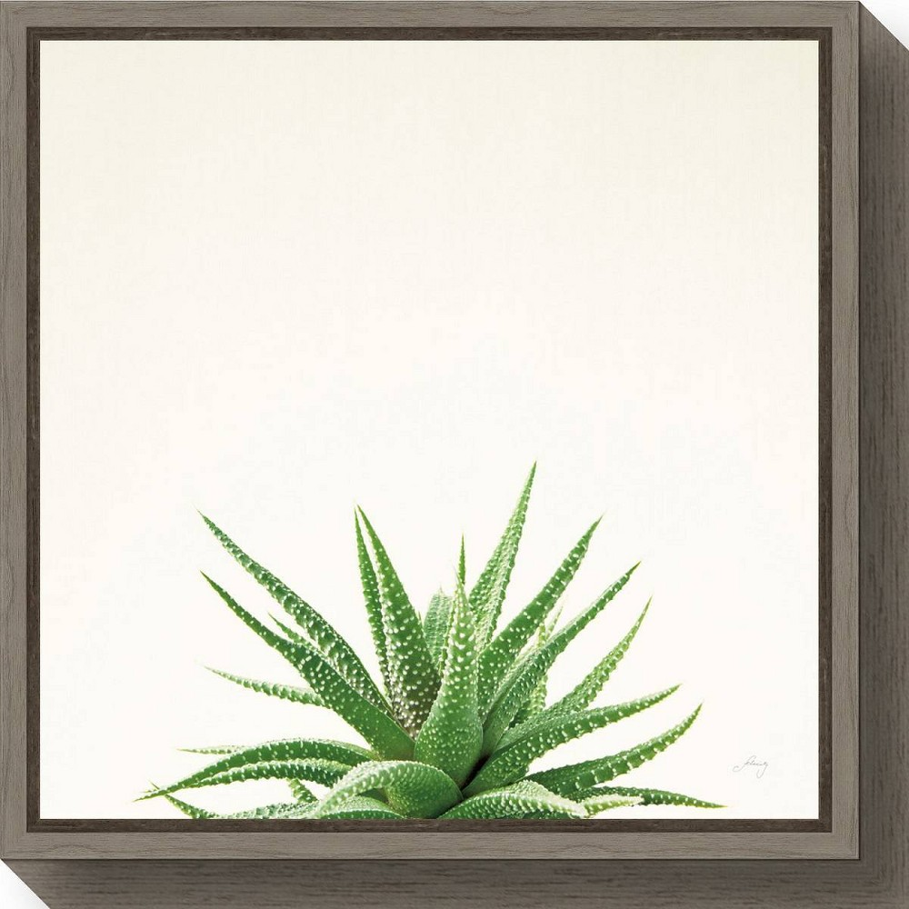 "Image of ""16"""" X 16"""" Succulent Simplicity I Neutral By Felicity Bradley Greywash - Amanti Art, White Green"""