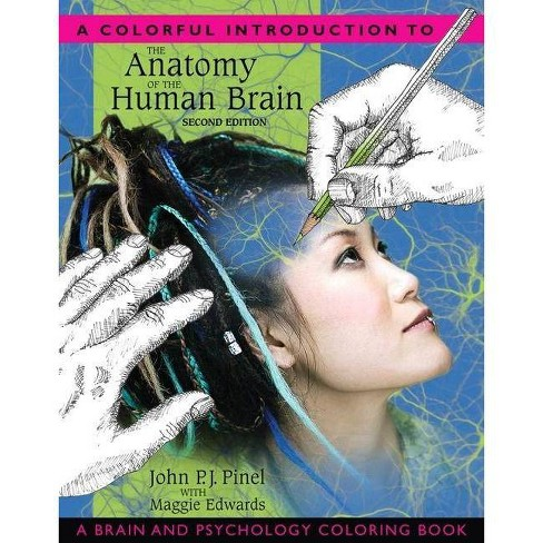 A Colorful Introduction to the Anatomy of the Human Brain - 2 Edition (Paperback) - image 1 of 1