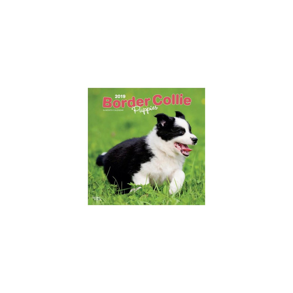 Border Collie Puppies 2019 Calendar - (Paperback)