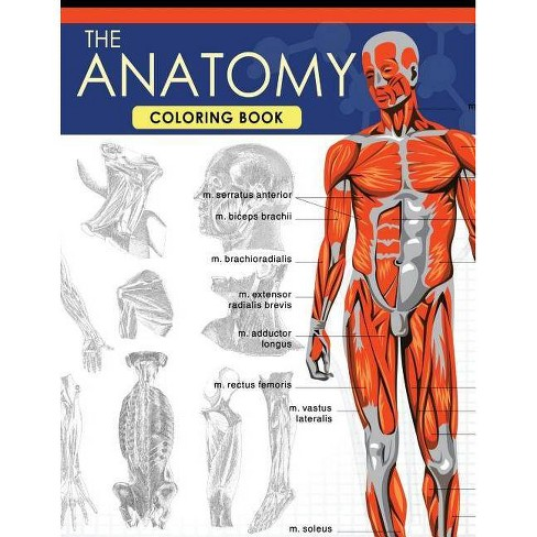 The Anatomy Coloring Book - by Dr Jessica C Flynn (Paperback)