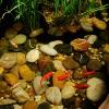 """8.69"""" Pond Boss Algaecide for Pond & Fountains - 16oz - image 3 of 3"""
