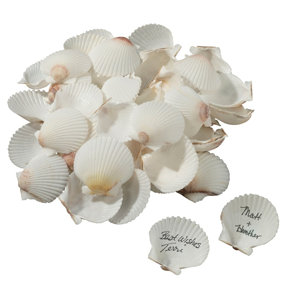 Natural White, Ivory, Tan Natural Signing Shells, Soft Taupe