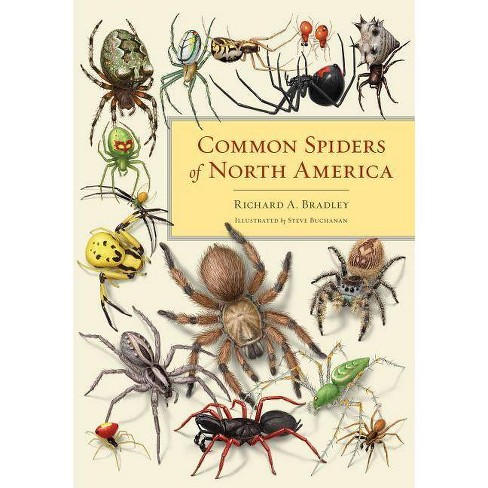 Common Spiders of North America - by  Richard A Bradley (Paperback) - image 1 of 1