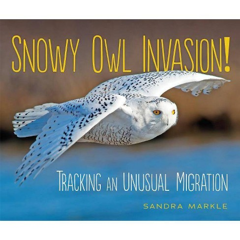 Snowy Owl Invasion! - (Sandra Markle's Science Discoveries) by  Sandra Markle (Hardcover) - image 1 of 1