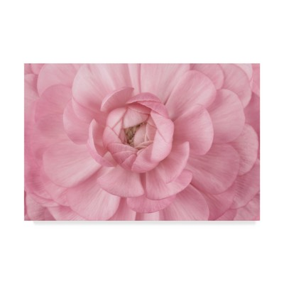 "Cora Niele Pink Flower Petals Unframed Wall 22""X32""   Trademark Fine Art by Trademark Fine Art"