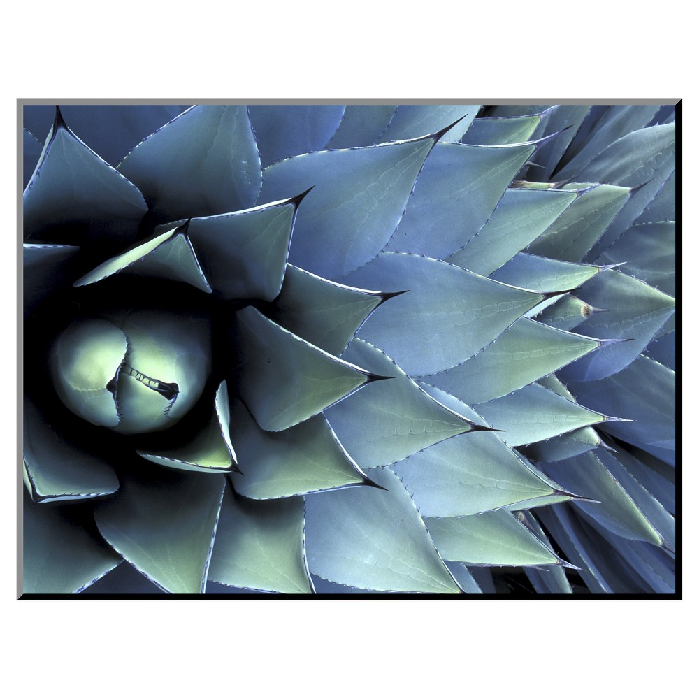 Pattern in Agave Cactus by Adam Jones Mounted Photo, Blue