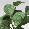 "8"" x 8"" Artificial Verigated Leaf House Plant in Pot - Threshold™ - image 3 of 4"