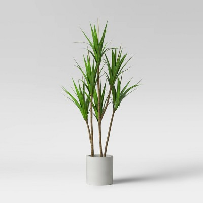 "65"" Dracaena Plant in Pot - Project 62™"