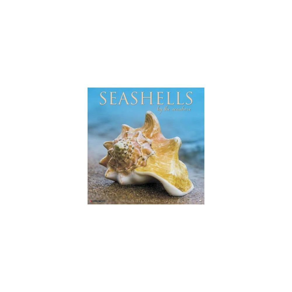 Sea Shells 2020 Calendar - (Paperback)