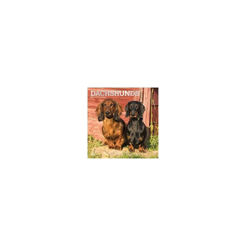 Dachshunds 2019 Calendar - (Paperback)