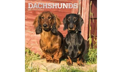 Dachshunds 2019 Calendar -  (Paperback) - image 1 of 1