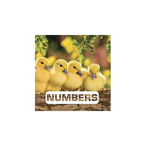 Numbers - (Picture This) by  Judith Nouvion (Board_book) - image 1 of 1
