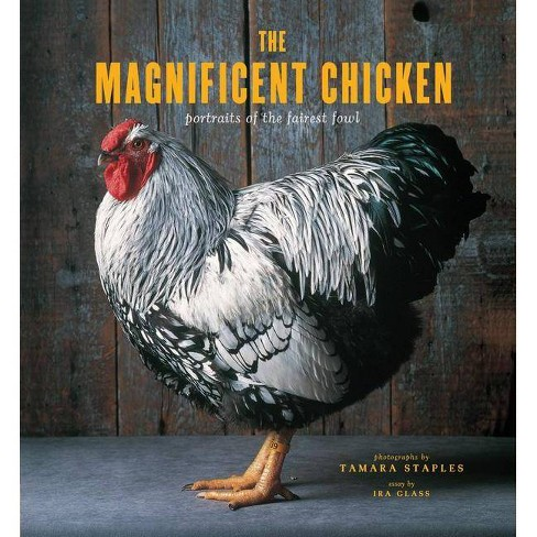The Magnificent Chicken - by  Tamara Staples (Hardcover) - image 1 of 1