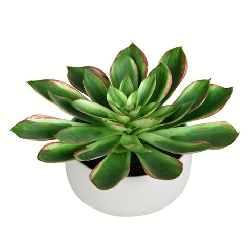 """Vickerman 10"""" Potted Green Succulent. - image 1 of 2"""