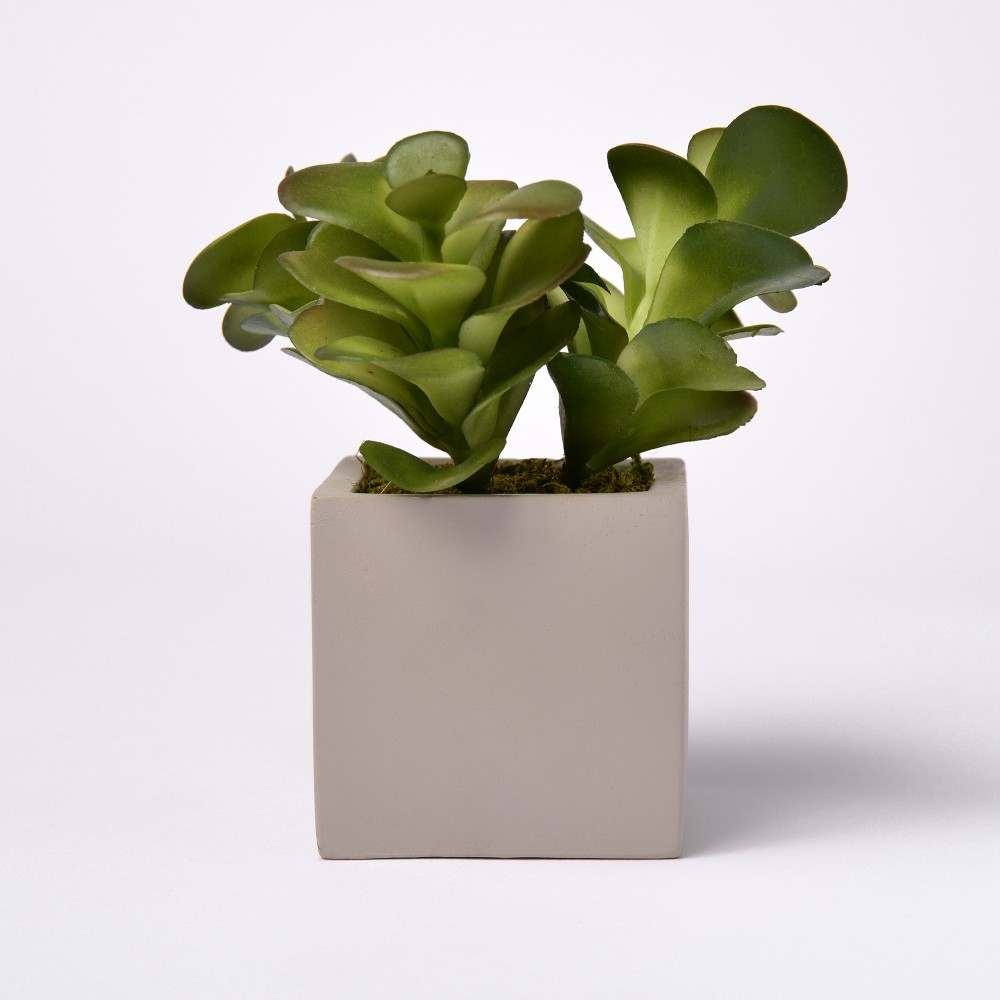 Image of 6.5 Artificial Succulent in Cement Pot - Lloyd & Hannah, Green
