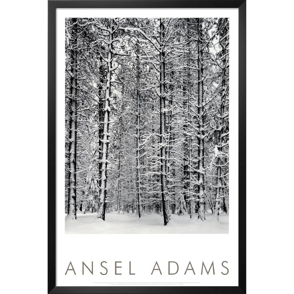 Art.com - Pine Forest in Snow Framed Print