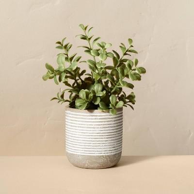 "7.5"" Mini Faux Jade Potted Plant - Hearth & Hand™ with Magnolia"