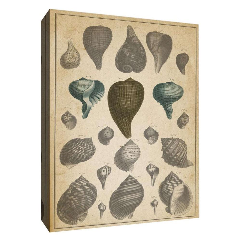 Main Shells I Decorative Canvas Wall Art 11