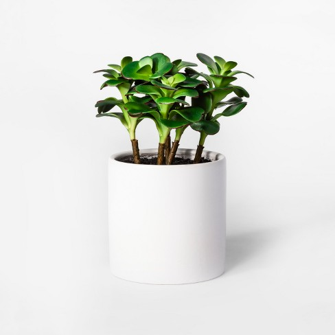 10 X 7 Artificial Jade Plant Succulent In Pot Greenwhite