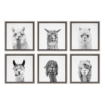 "6pc 13"" x 13"" Sylvie Alpaca Portrait Framed Canvas Wall Art Set by Simon Te Gray - Kate and Laurel"