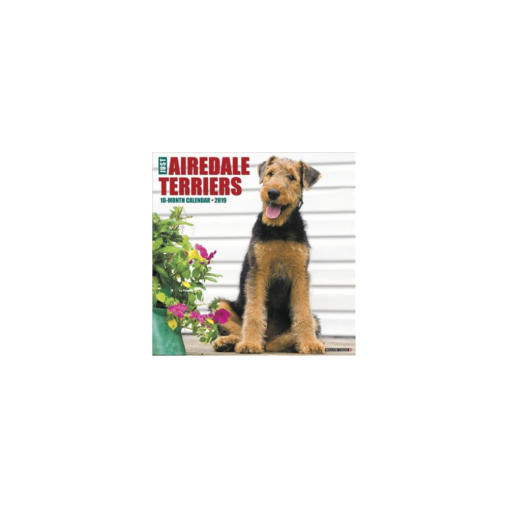 Just Airedale Terriers 2019 Calendar - (Paperback)