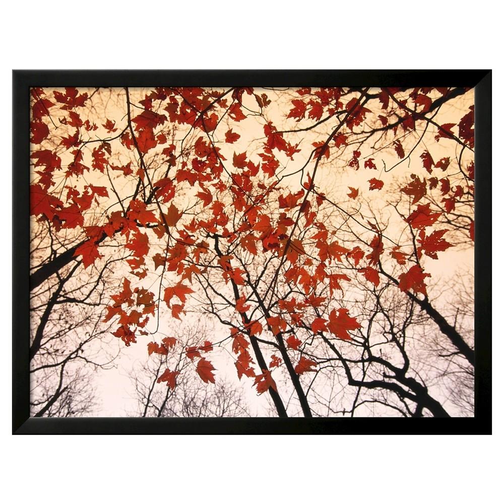 Art.com Red Maple and Autumn Sky by Raymond Gehman - Framed Art Print, Black