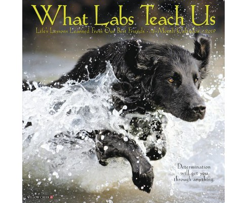 What Labs Teach Us 2019 Calendar -  (Paperback) - image 1 of 1