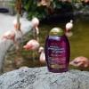 OGX Detoxifying + Pomegranate & Ginger Shampoo - 13 fl oz - image 3 of 3