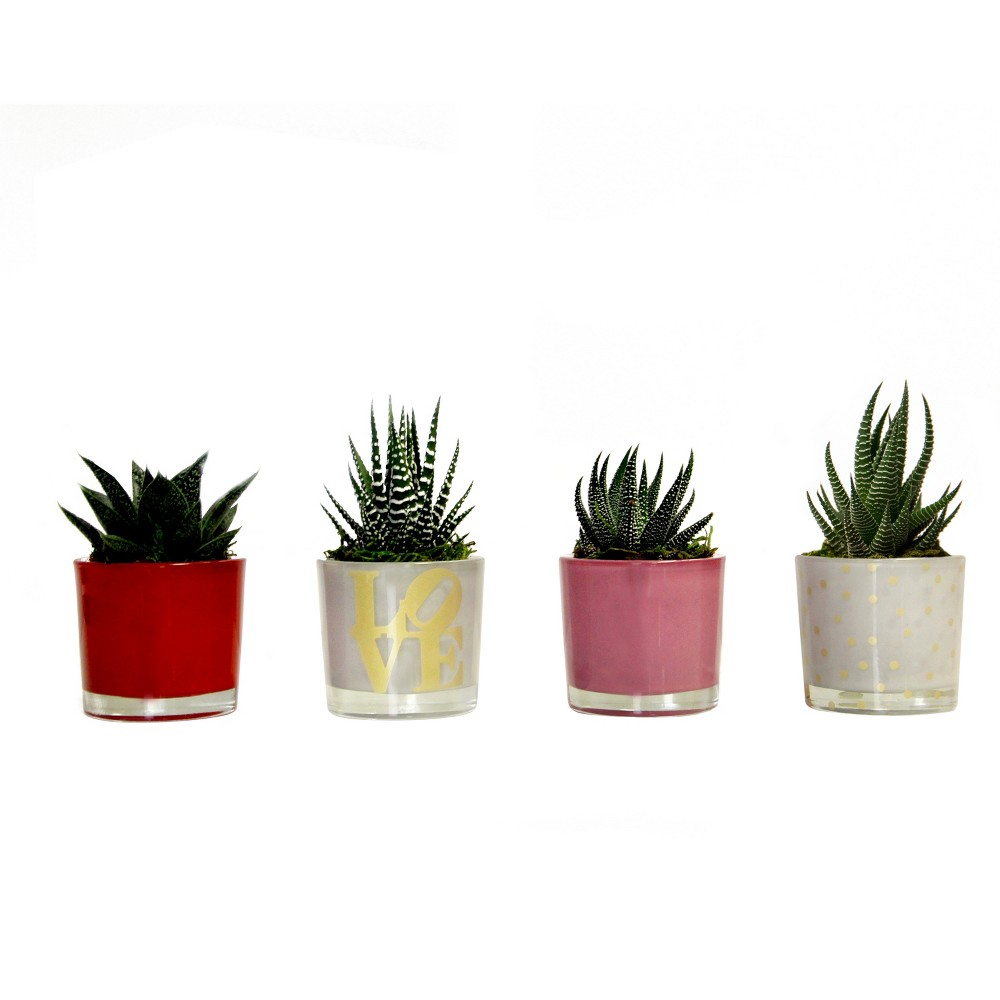 Espresso Love Collection 4pk Living Succulents In Decorative Glass Containers - Livetrends Design
