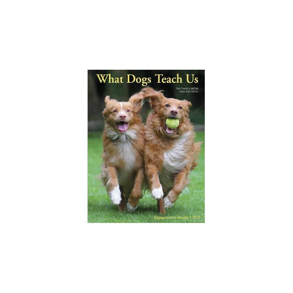What Dogs Teach Us 2020 Calendar - (Paperback)