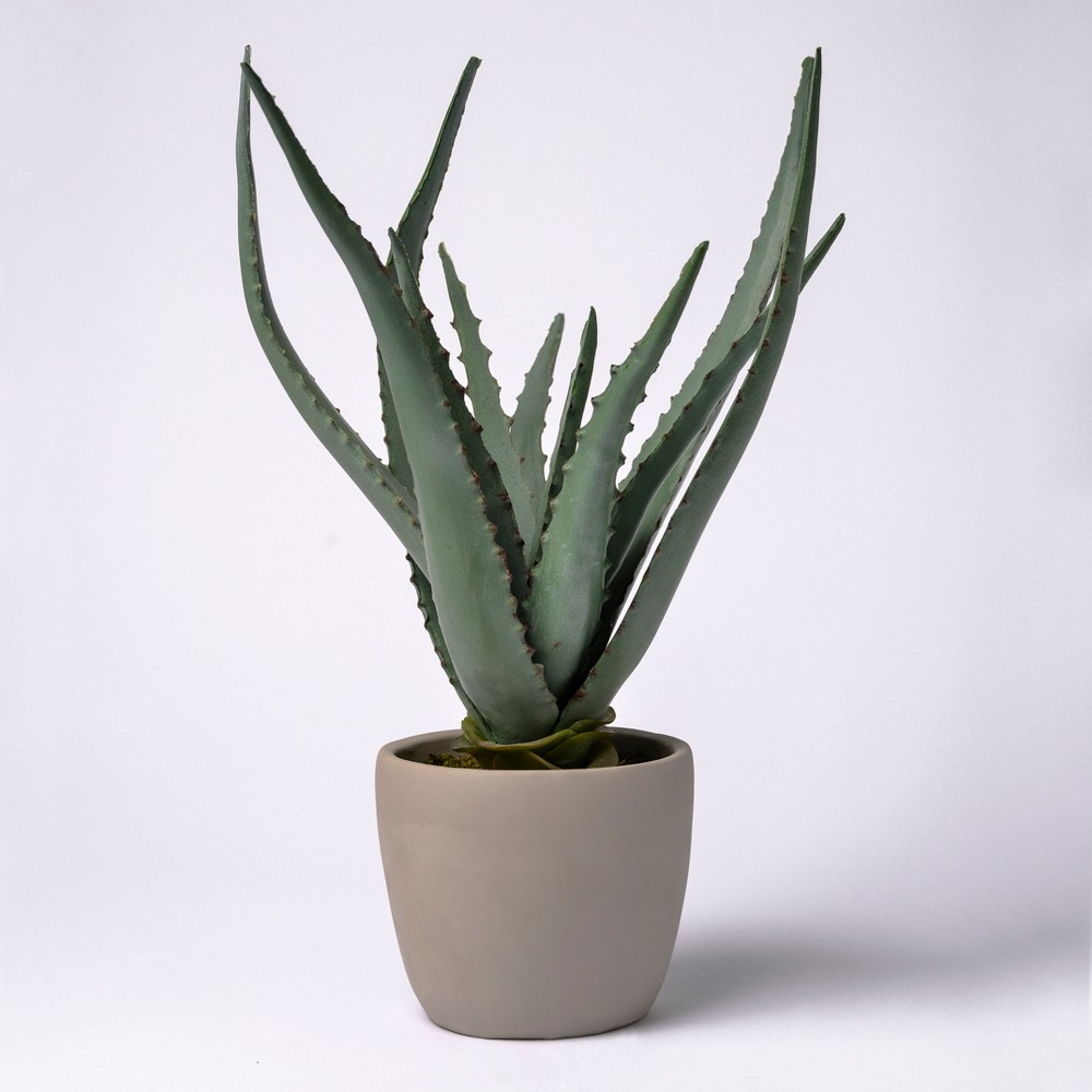 Image of 18 Potted Aloe Vera - Lloyd & Hannah