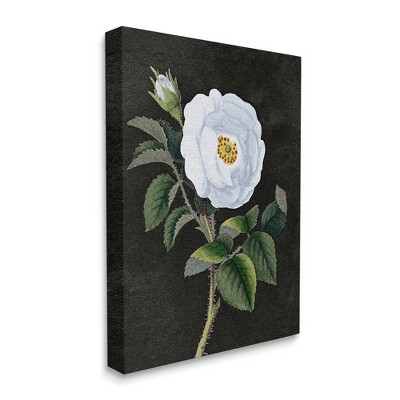 Stupell Industries White Poppy Illustration Vintage Flower Thorns