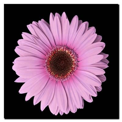 'Pink Gerber Daisy' Ready to Hang Canvas Wall Art