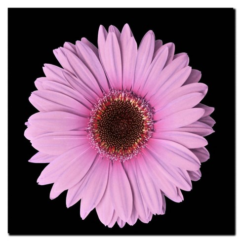 'Pink Gerber Daisy' Ready to Hang Canvas Wall Art - image 1 of 1